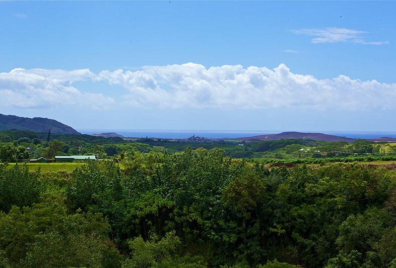 View from Kauai Banyan Inn